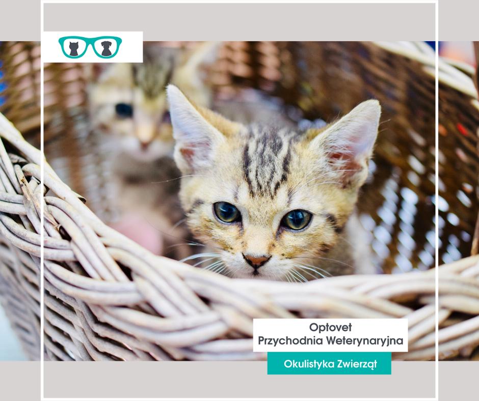 Herpeswirusowe zapalenie spojówek u kota
