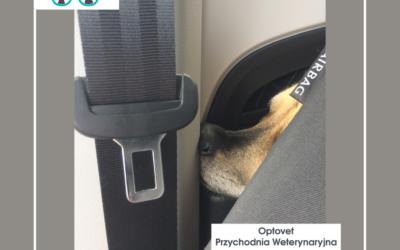 Choroba lokomocyjna u psa i kota. Jak temu zaradzić