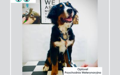Kaszel u psa. Przyczyny, rozpoznanie oraz leczenie.